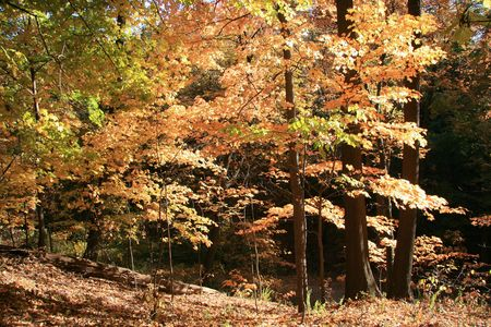 Herfst kleuren in het bos op een heldere dag Stockfoto
