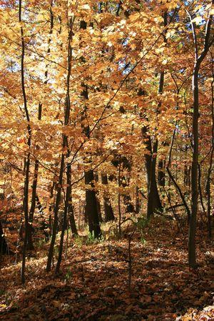 Herbst-Farben in den Wald an einem klaren Tag Standard-Bild - 3796851