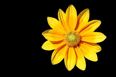 Isolated Yellow Flower on Black