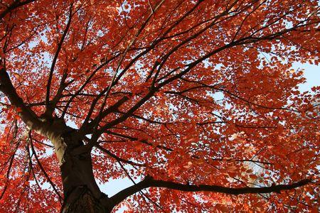 Herbstfarben im Wald Standard-Bild - 5501506