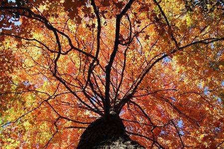 Herbstfarben im Wald Standard-Bild - 5501507