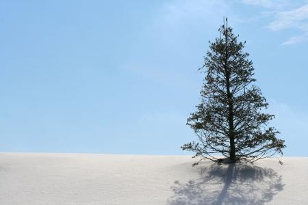Winter wonderland with christmas tree on Hill