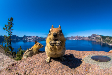 Friendly critter at Crater Lake National Park - Oregon