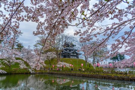 Cherry blossoms at Takada-jo in Joestu. Niigata Prefecture