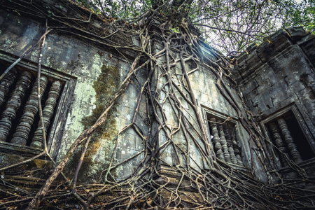 Roots overgrowing a temple ruin at Beng Malea