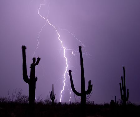 Saguaro cacti silhouetted by a lightning bolt in desert southwest United States photo