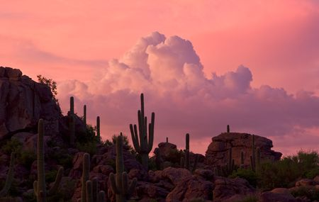 thundershower: Western sunset under high clouds with thundershower and saguaro cacti Stock Photo