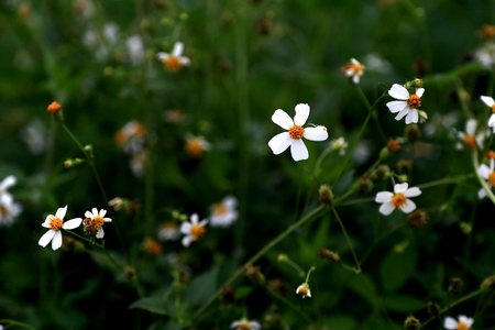 stunning: Stunning flowers Stock Photo