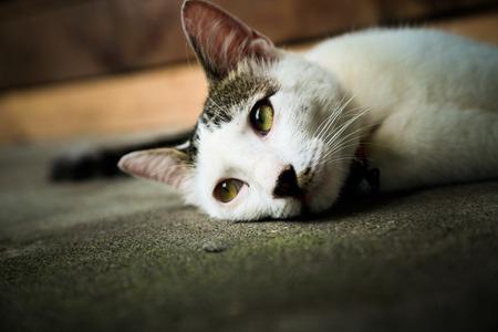 Cat lying in a daze photo