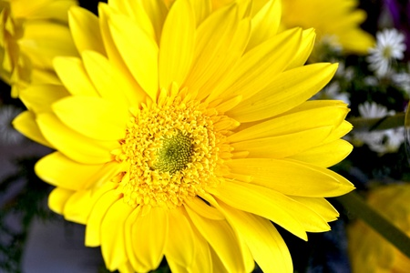 a close up look of sunflower photo
