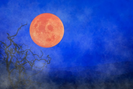 nightmarish: Halloween Holiday Background ~ Fog Orange Full Moon & Twisted Tree Branches Stock Photo