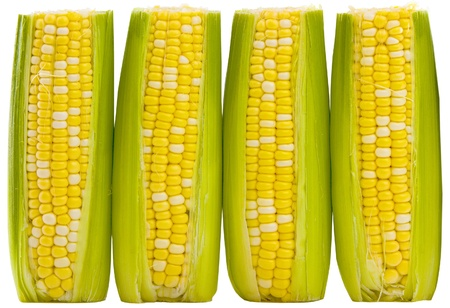 Three ears of supersweet yellow and white corn isolated on white background. Includes clipping Path