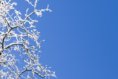 skyscape: Snow Covered Branches And Crisp Clean Blue Winter Sky Stock Photo