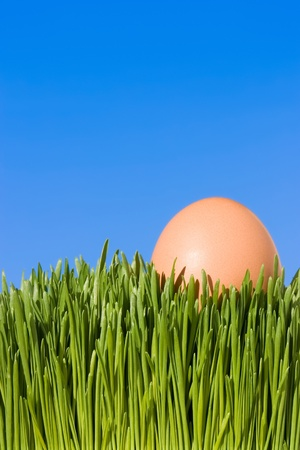 A Detailed Close Up Of A Brown Egg, Nestled In the Green Grass with Blue Sky Copy Space ~ Clipping Path photo