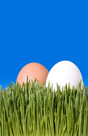 A Close Up Of Two Brown and White Eggs, Nestled In the Green Grass with Blue Sky Copy Space ~ Clipping Path photo
