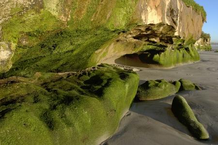 bluff: Coastal Sea Bluff ~ Seaweed, Crabs and Caves