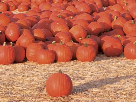 Gorgeous Bright Orange Pumpkins In A Hugh Pile  photo