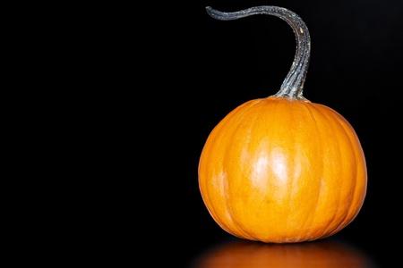 One Small Orange Pie Pumkin With Longs Curly Stem On Dark Black Background photo