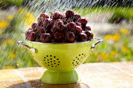 Fresh Red Cherries Are Washed In Green Colander ~ Yellow Flowers in Background Stock Photo