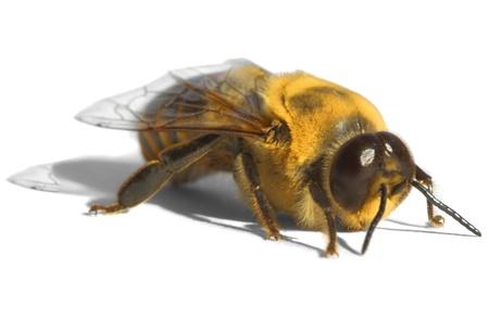Giallo Brillante Bee ~ Drone Archivio Fotografico - 11761180