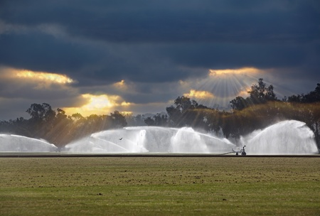 Irrigating Of A Green Grass Polo Field, Irrigation Rain Bird Jets Spraying Water Against A Dramatic Cloudy Sky With God Rays At Sunset Or Sunrise In Bad Weather