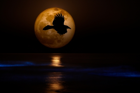 bioluminescent: Full 2012 Supermoon With Black Flying Raven Silhouette Setting Over Pacific Coast Sea Glowing with Sinister Bio-luminescent Waves ~ Spooky Ocean Beach