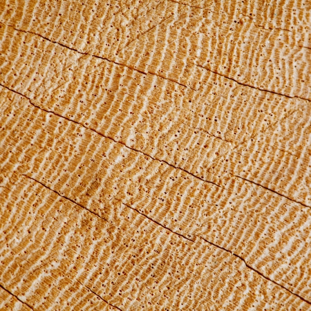 Wood Background Texture Section Of Cracked Hardwood Concentric Growth Rings