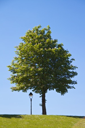 Lantern and tree in summer