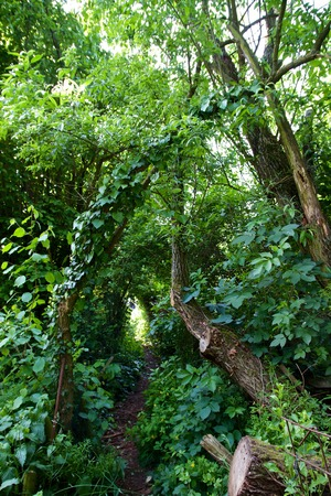 a small narrow forest Path