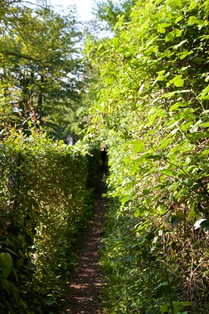 small narrow path between hedges