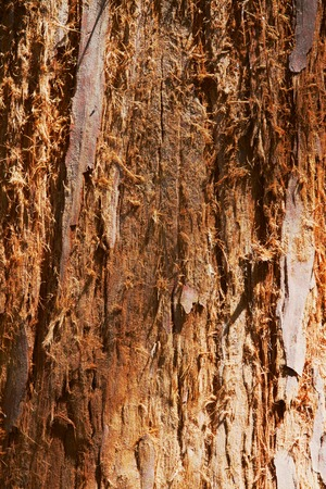 fibered: bark