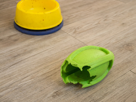 nibble: Chewed rugby rubber dog toy and dog bowl on wooden background