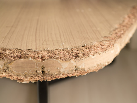 nibble: Close up Chewed wooden table