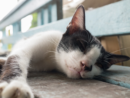 slumberous: A little cat sleeping on a wooden bench Stock Photo