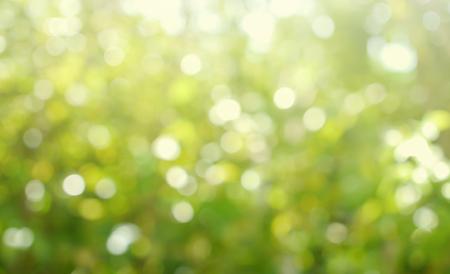 De focused of Natural green leaf blurred background. Bokeh effect lighting.