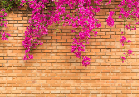 Close up orange brick wall with pink flowers texture background close up orange brick wall with pink flowers texture background stock photo 57033171 mightylinksfo