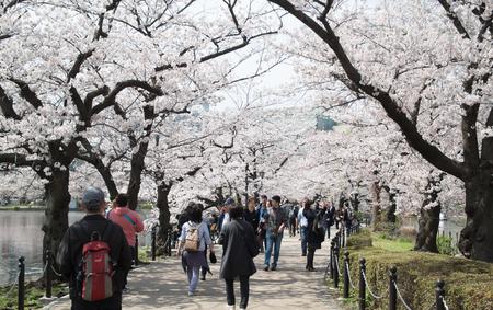 TOKYO, JAPAN - APRIL 06. 2016: Ueno Park ist geräumig öffentlichen Park im Ueno Bezirk Taita, Tokyo, Japan.It'is den berühmtesten Ort, um Menschen entspannen und genießen Kirschblüten Sakura sehen. Standard-Bild - 61755940