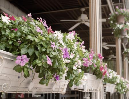purple and white Vinca flower decorate in white basket flower pot ( Vintage tone color )