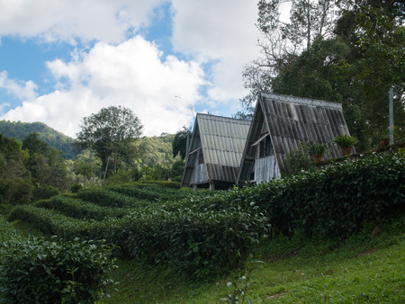 Landscape of house in tea plantation at Doi-Montngo , Chiang Mai, Thailand