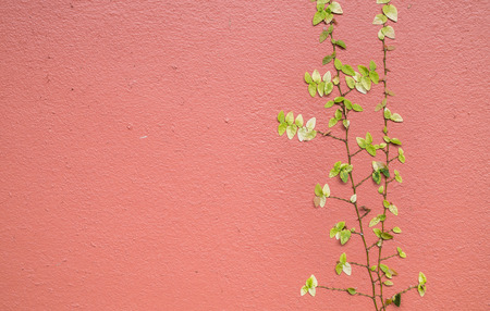 Green ivy leaves on  orange , red  cement wall texture background
