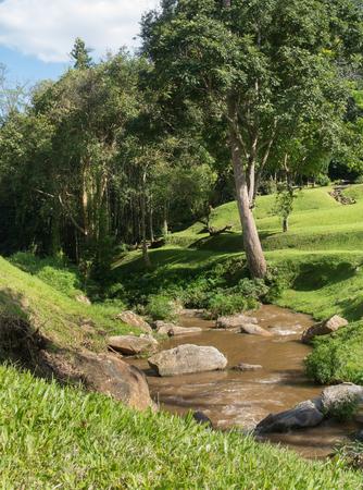 Natürlicher Hintergrund des Waldes mit Kanal Standard-Bild - 93945845