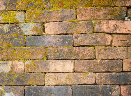 Alte alte orange Backsteinmauer mit Moosbeschaffenheitshintergrund Standard-Bild - 93942083