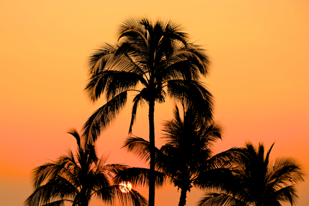maui: Palm Trees with Orange Sky During Sunset in Maui