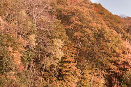 Autumn colors of the trees along the Blue Ridge Pkwy.