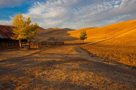 dry cow: California farm land scene with rolling grassland  pasture hills and a path leading into the distance in early evening warm sunlight Stock Photo