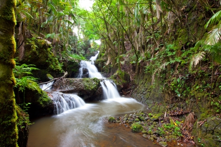 Beautiful water fall flowing through a serene tropical rain palm forest