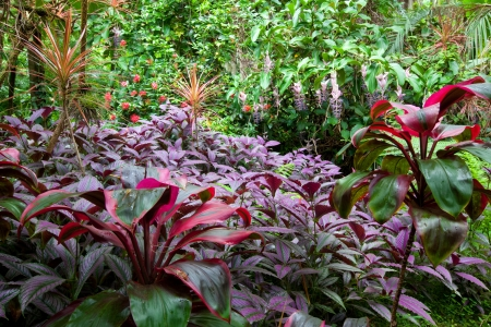 Colorful, lush tropical rain forest with a diverse range of plants and trees on Hawaii Stock Photo
