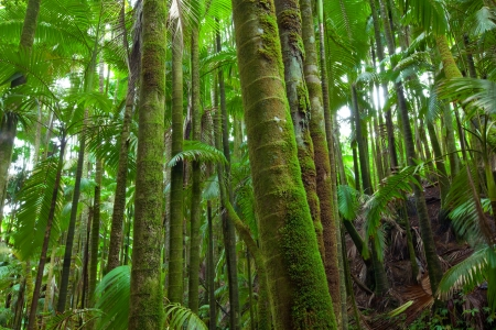 Calm, lush, green and moist palm trees in a tropical rain forest ecosystem Stock Photo