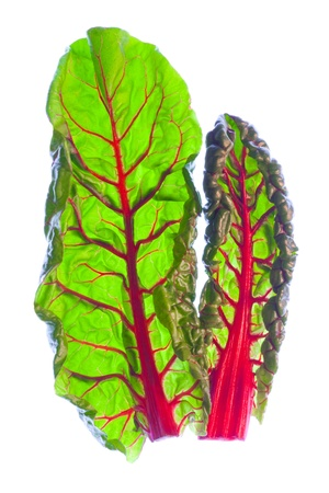 Two young, fresh red Swiss chard leaves  beta vulgaris   Stock Photo
