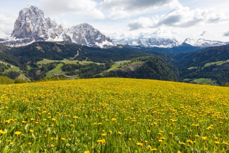 Beautiful, peaceful alpine scene in the Italian Dolomites mountains on a sunny day with clouds. Meadow filled with yellow flowered dandelions in the foreground; forested hills and valleys leading up to the snowy peaks.
